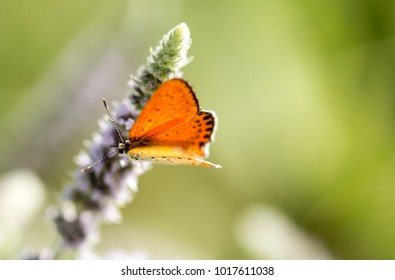 Beautiful butterfly in the wild on a plant