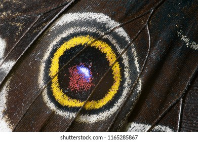 Beautiful butterfly wing, macrophoto