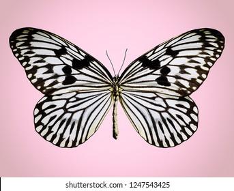 Beautiful Buttertfly On Pink Background