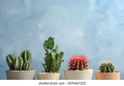 Beautiful cacti on color background