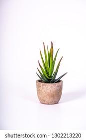 a beautiful cactus