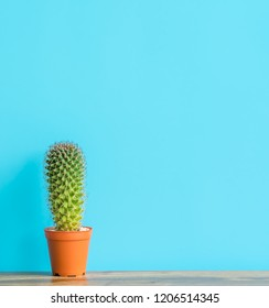 Beautiful  cactus  with  sharp  thorn in  brown  pot  on  wooden  surface with  blue  background.