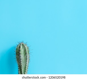 Beautiful  cactus  with  sharp  thorn  on  blue  background