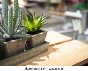 Beautiful cactus in wooden flowerpot on table, Cactus plant in flowerpot on wooden table, Cactus in wooden vase on the old wooden table ,Home decoration concept.