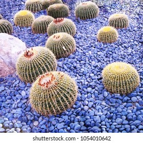 Beautiful cactuses in Arizona, Scottsdale