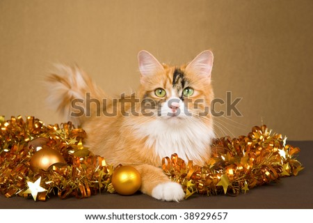 beautiful calico cat with christmas decorations on bronze background