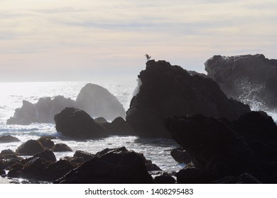 Beautiful California coast featuring ocean birds, local surfers, rocky coves, and classic sunsets