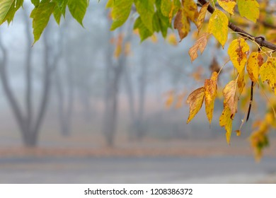 Beautiful calm misty autumn park yellow leaves frame