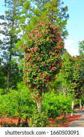 It is a beautiful camellia blooming in spring.
