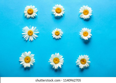 Beautiful camomile flowers on color background
