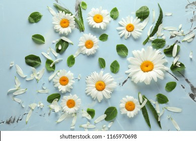 Beautiful camomile flowers on light background