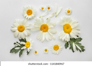 Beautiful camomile flowers on white background