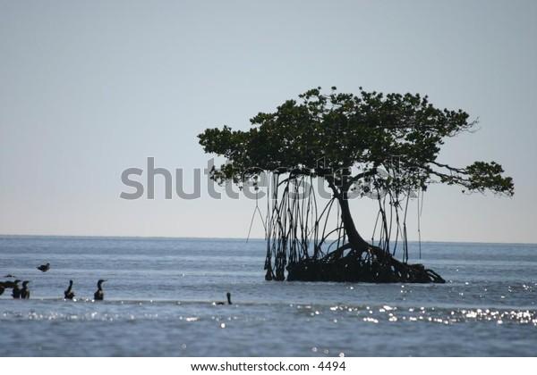 beautiful canopied trees on island in the sea