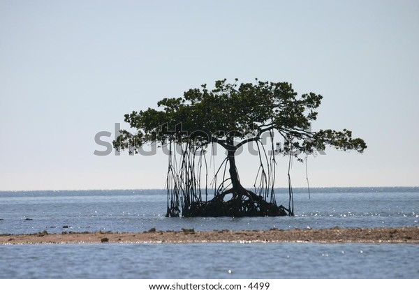 beautiful canopied trees on island in the sea