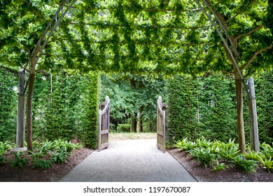 Beautiful canopy of trees trained over an archway