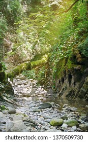 Beautiful canyon covered with moss and ivy with a flowing streams of the mountain creek in the morning sunlight