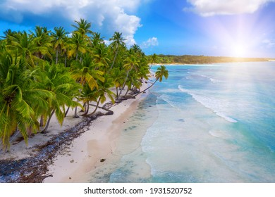 Beautiful caribbean beach on Saona island, Dominican Republic. Aerial view of tropical idyllic summer landscape with green palm trees, sea coast and white sand