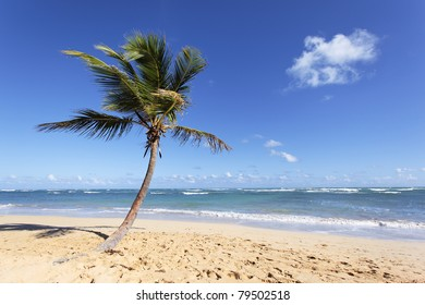 beautiful caribbean beach with palm trees in summer