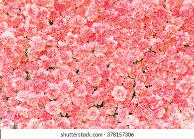 Pink flowers background images stock photos vectors shutterstock beautiful carnation flowerpink flower background of carnation flower mightylinksfo