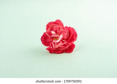 Beautiful carnation flowers for mother's day