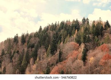 Beautiful Carpathian landscape