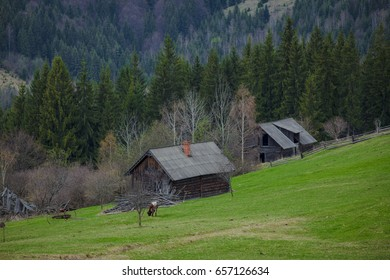 Beautiful Carpathians in Ukraine. Green forest in the mountains. House in the forest