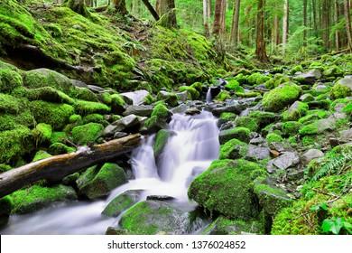 Beautiful cascade water falls at Sol Duc Falls trail, Olympic National Park, Washington USA.