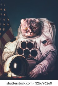 Beautiful cat astronaut. Elements of this image furnished by NASA.