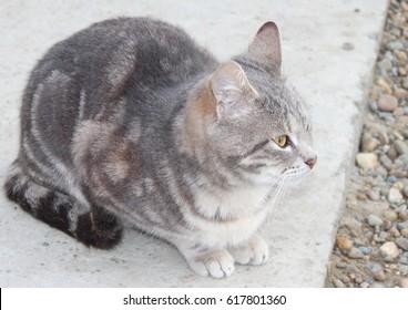 beautiful cat close up in the yard