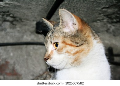 beautiful cat, close-up eye