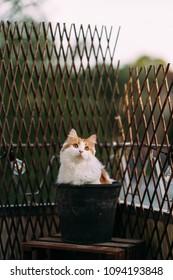 Beautiful cat enjoys evening sun in a pot