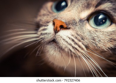 Beautiful cat face with big kind green eyes, close up.