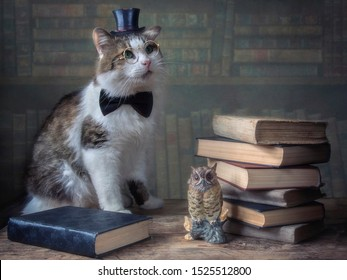 Beautiful cat with glasses and hat cylinder with books