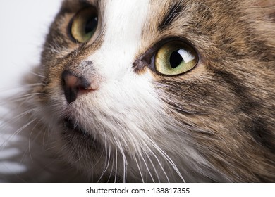 beautiful cat with green eyes close looking up