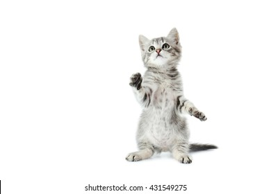 Beautiful cat isolated on white background