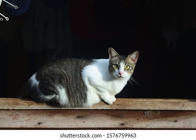 beautiful cat look at on the window