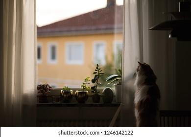Beautiful cat looking through window