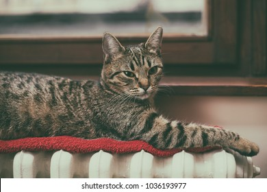 Beautiful cat lying down on radiator by the window.Image is intentionally toned.