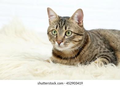 Beautiful cat lying on white wool, close up