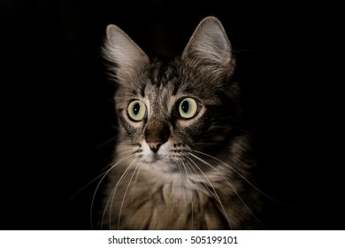 Beautiful cat on a black background