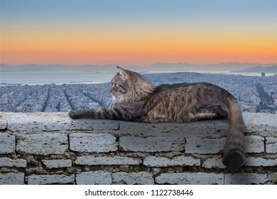 Beautiful cat on wall at the sunset in Greece