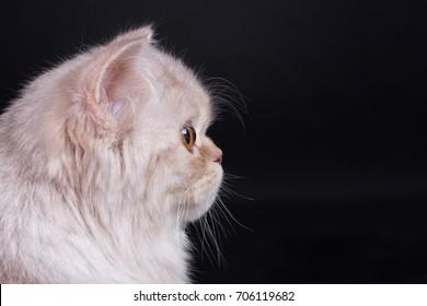 Beautiful  cat is playing. Kitten. Portrait.