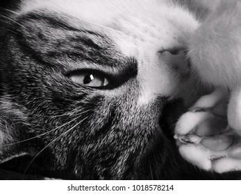 beautiful cat portrait, closeup
