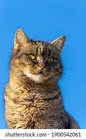 Beautiful cat portrait isolated on the blue sky background.