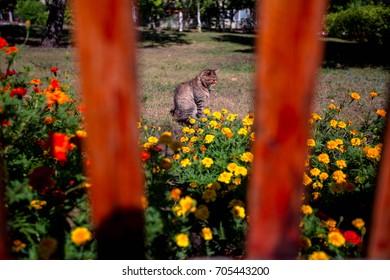 Beautiful cat sitting in flowers