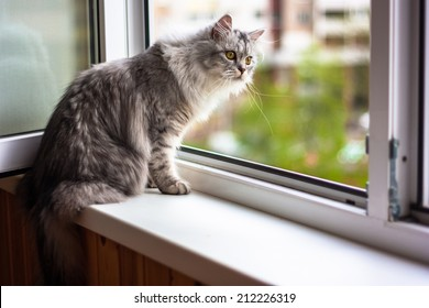 Beautiful cat sitting on a windowsill and looking to the window
