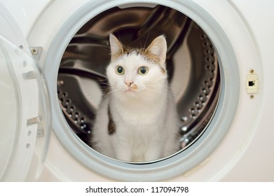 Beautiful cat sitting in the washing machine