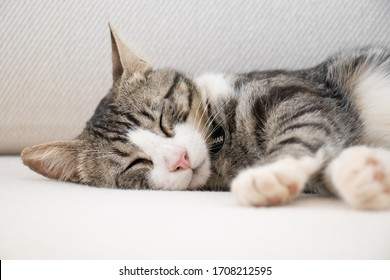 Beautiful cat sleeping on a white sofa
