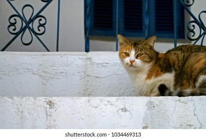 Beautiful cat in Tinos island, Cyclades, Greece.