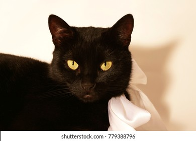 beautiful cat with yellow eyes